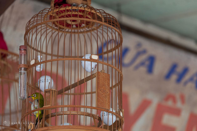 hanoi oiseau en cage