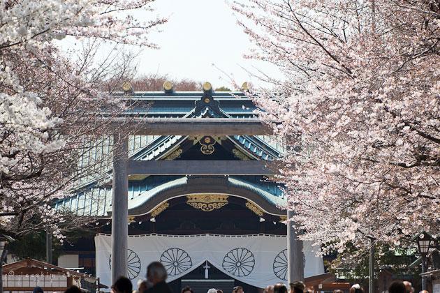 Yasukuni hanami