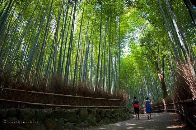 arashiyama, bamboo forest