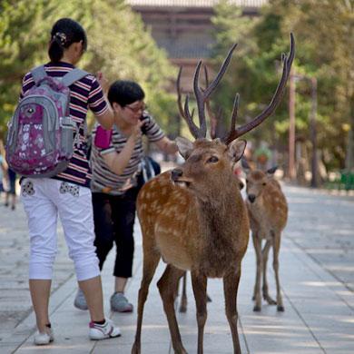 Nara • 奈良