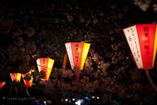 Rivière Meguro, Nakameguro, hanami, cerisiers en fleurs Tokyo