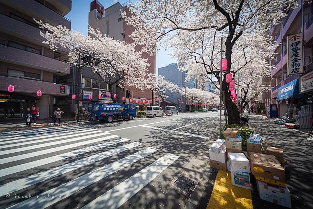 Sakura, hanami, cerisier, tokyo