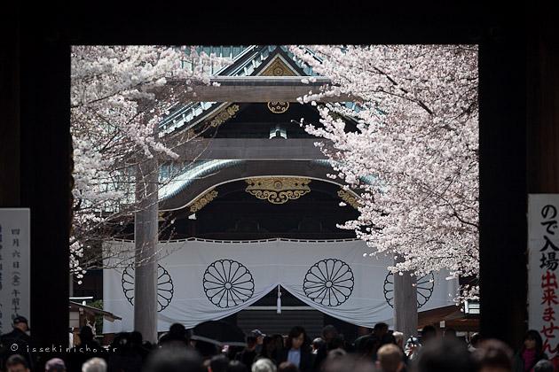 Temple Yasukuni hanami cerisier en fleurs Tokyo