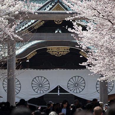 Hanami au sanctuaire Yasukuni • 靖国神社
