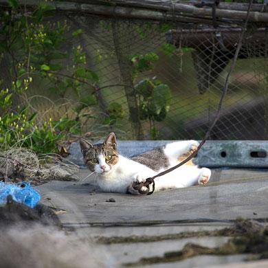 Tashirojima, l'île aux chats : 1/2