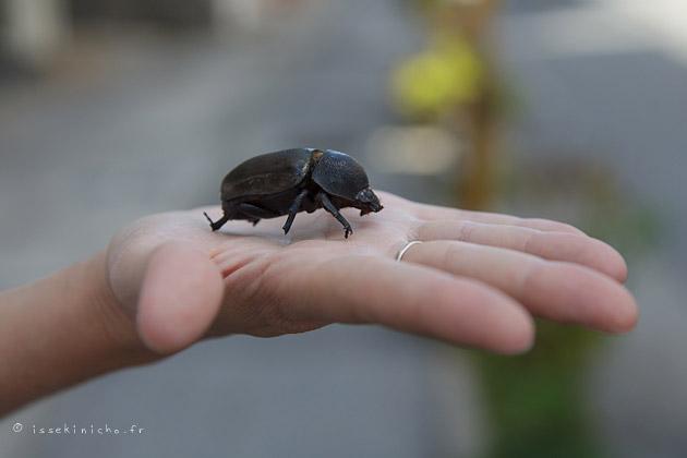 insecte japon