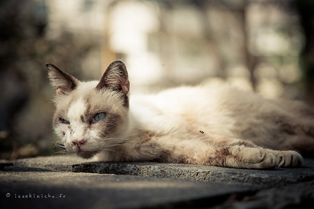 chat, neko, okinawa, naha, cat, japon, japan