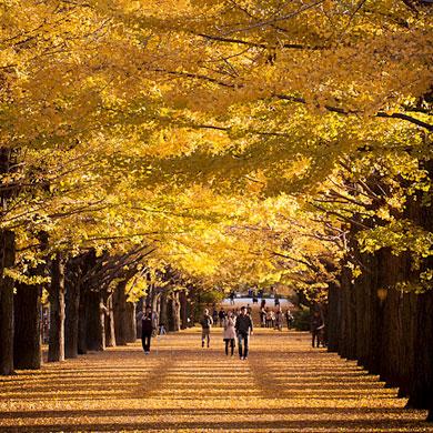 L'automne au parc Showa Kinen