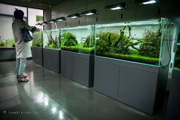 Achat aquarium acrylique for Achat aquarium design