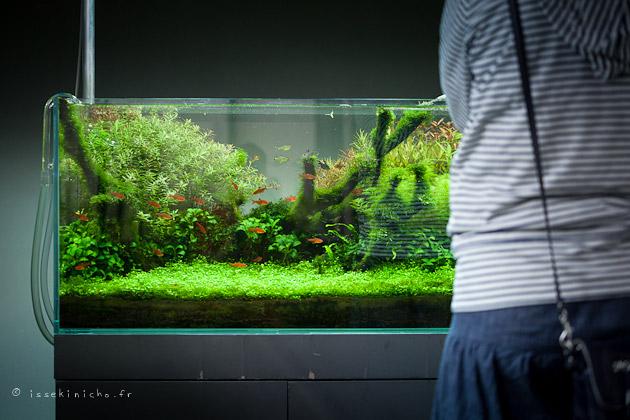 ADA, aqua design amano, japon, aquarium, niigata