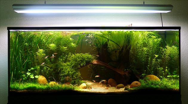 240 litres, aquarium