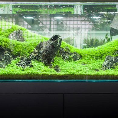 Visite du show-room ADA Aqua Design Amano