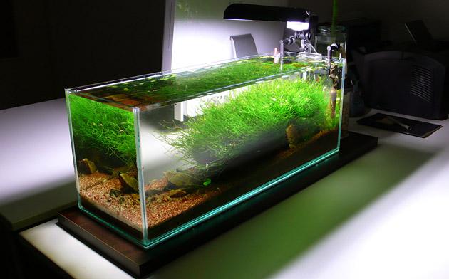 18 litres, aquarium