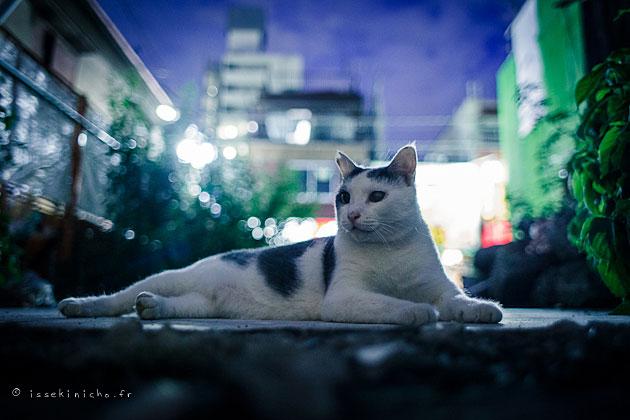 nekoland, chat,cat, chat errant, japon,japan,tokyo,niigata