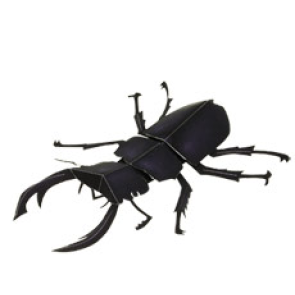 e_stag-beetle_thl.jpg