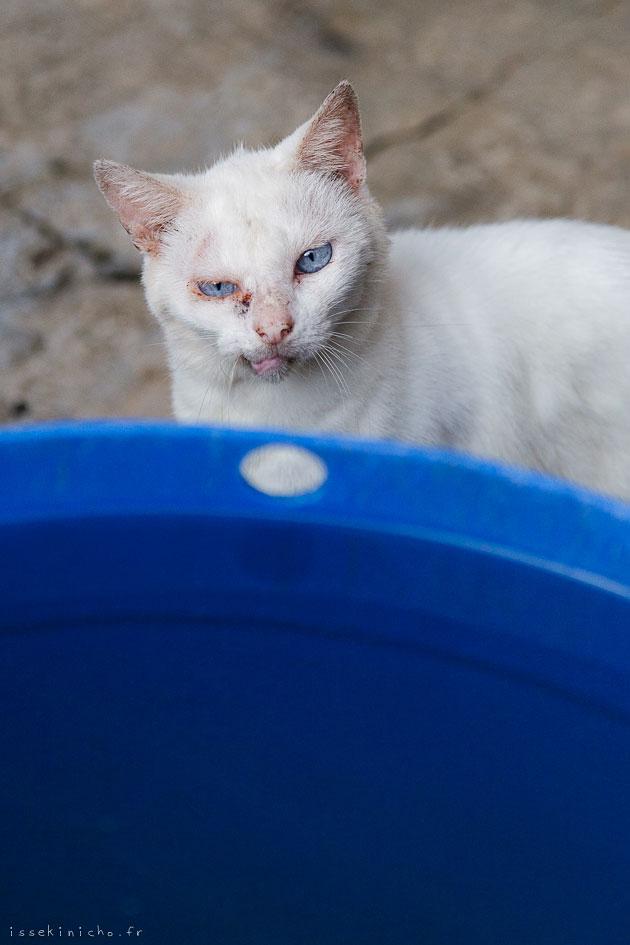 grumpy cat, japan, ishigaki, okinawa