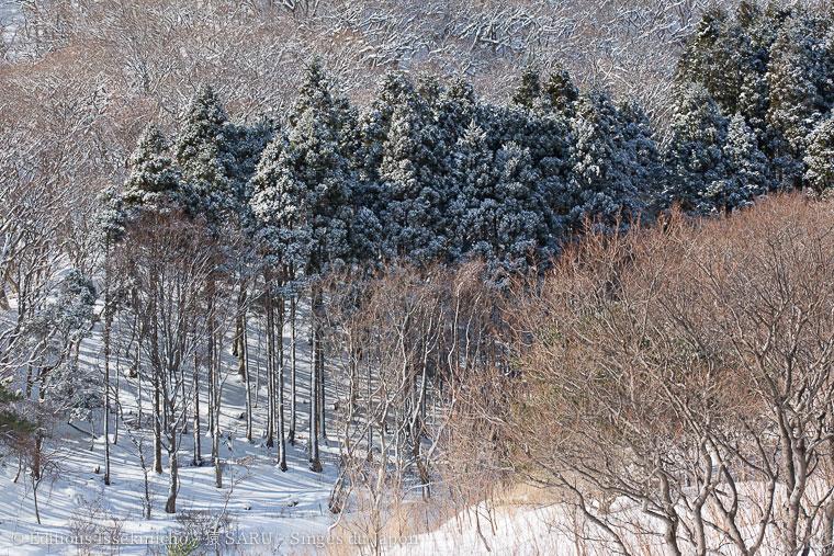 saru, monkey, singe, japon, japan, wakinosawa, shimokita, peninsula