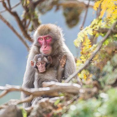 Saru – Singes du Japon – épisode 03 – Arashiyama 嵐山