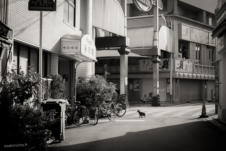 photos chats Japon