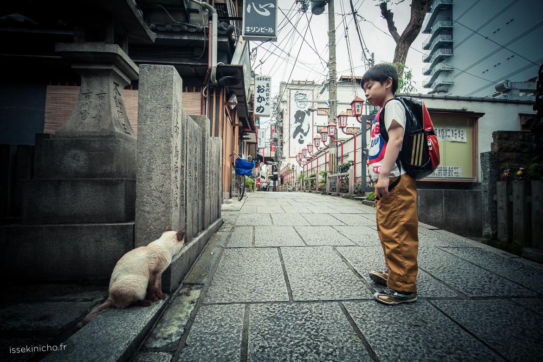 chats Japon balade