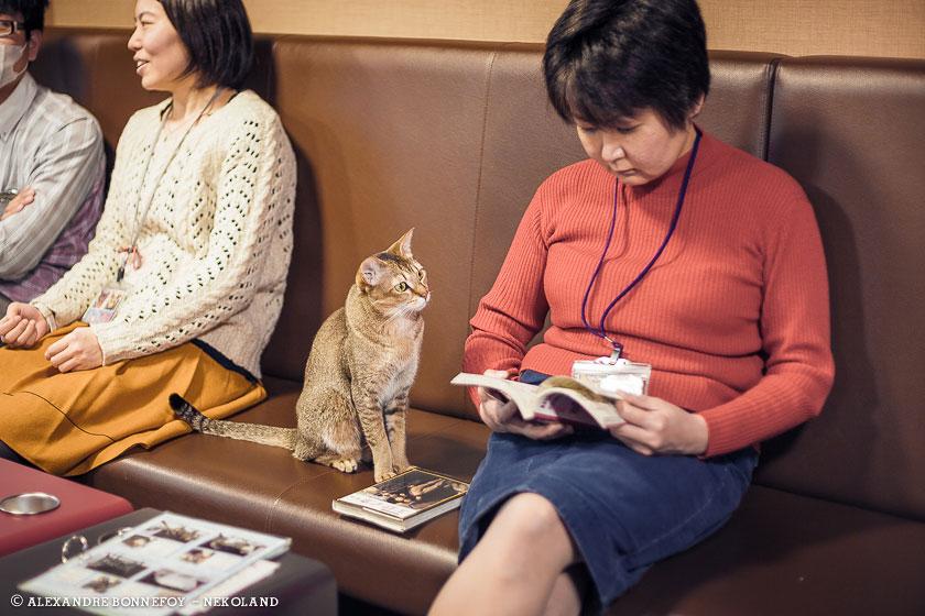 nekoland, chat, japon