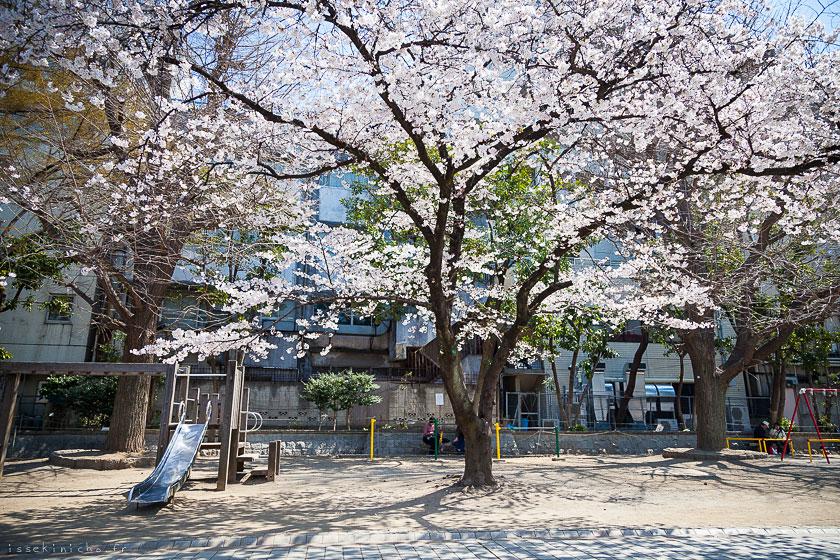 tokyo_ohanami000-4