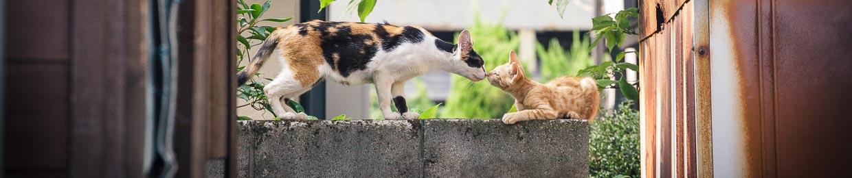 photo de chats au Japon
